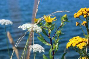 flowers by the Jorgensen Pier