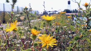 Jorgensen Pier flowers