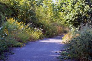 Drayton Harbor trail in Blaine