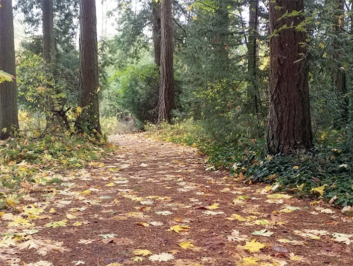 Lincoln Park in Blaine washington walking
