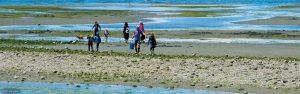 Semiahmoo Beach Tidal Pool Adventures