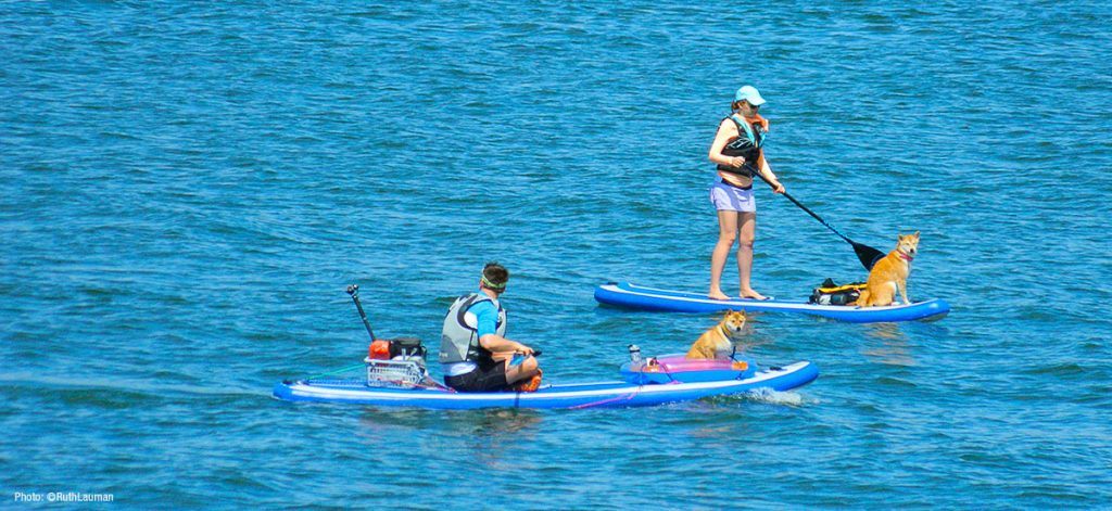 Kayaking with your dogs off Semiahmoo Bay in Blaine